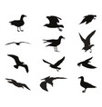 set of silhouettes of seagulls vector image