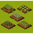 Vegetable Garden Box vector image vector image