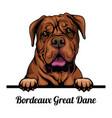 bordeaux great dane - dog breed color image vector image vector image