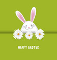 easter background with bunny and daisies vector image vector image