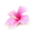 Hibiscus flower blossom vector image