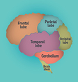Parts of the human brain vector image vector image