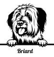 peeking dog - briard breed - head isolated vector image vector image