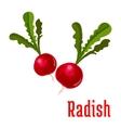 Radish tuber vegetable plant icon vector image