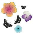 black butterfly with petunia vector image vector image