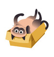 cat lying on box siamese breed domestic animal vector image vector image