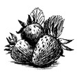 Hand sketch strawberries vector image vector image