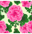 seamless texture pelargonium geranium pink vector image vector image