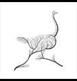 silhouette of ostrich stylized bushes for use as vector image vector image