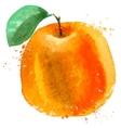 Orange logo design template food or fruit vector image