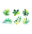 palm leaves collection beautiful tropical exotic vector image
