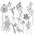 Wildflowers and insects sketch