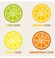 Citrus Icons in flat style vector image vector image