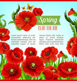 greeting poster of spring poppy flowers