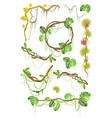 tropical liana creeper plant decorative elements vector image
