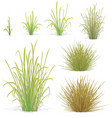 various tufts of grass elements vector image