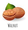 eco walnut icon cartoon style vector image vector image