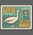 goose birds from farm retro poster vector image vector image