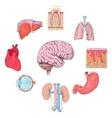 Human organs set vector image vector image