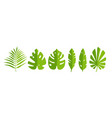 leaf set abstract icon green tropical leaves vector image