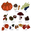 autumn crop hand drawn vector image