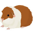 cartoon guinea pig vector image vector image