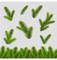 fir tree isolated transparent background vector image vector image