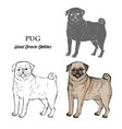 hand drawn pug dogs sketches vector image vector image