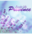 lavender background provence fields vector image vector image