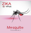 mosquito sucking blood on skin spread of zika and vector image vector image