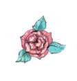 red rose embroidery sketch isolated on white vector image vector image