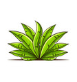 tropical bush with green vector image vector image