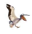 cartoon bird pelican runs with open beak vector image vector image