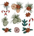christmas collection cones candy and fur tree vector image