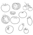 drawing tomatoes vector image