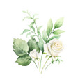 watercolor clipart with green eucalyptus vector image vector image