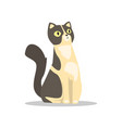 cute portrait of short-haired cat with black vector image vector image