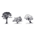 three trees hand drawn sketch vector image