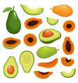 bright set of fresh papaya avocado vector image