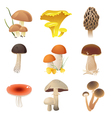 edible mushrooms vector image
