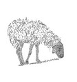 line art drawing of sheep eating grass vector image