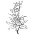 black and white drawing bouquet flowers vector image