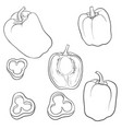 drawing sweet pepper vector image vector image