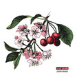 hand drawn cherry branch vector image vector image