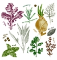 hand drawn herbs and spices set in color vector image