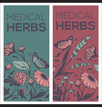 medical herbs flowers plants and leaves two vector image vector image