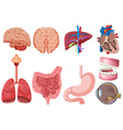 Set of human anatomy vector image vector image