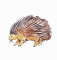 watercolor drawing of porcupine or hedgehog vector image vector image
