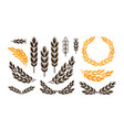 ear wheat bread logo or label harvest bakery vector image