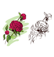 peony flower hand drawn vector image vector image